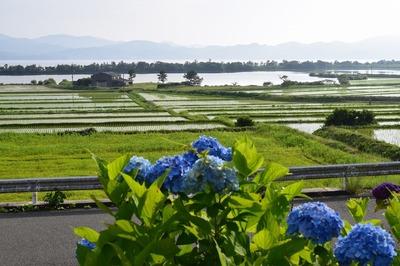 紫陽花と棚田と波の橋立.jpg