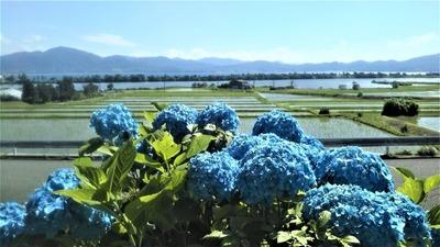 紫陽花・棚田・波の橋立.jpg