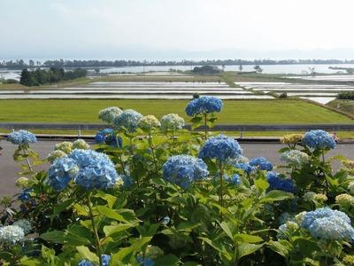 紫陽花・棚田・青海湖・波の橋立1.jpg