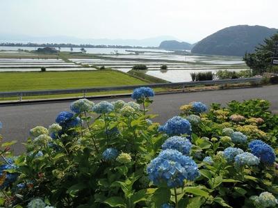 紫陽花・棚田・青海湖・波の橋立2.jpg