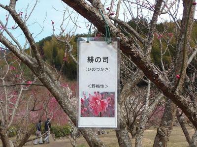 緋の司1.jpg