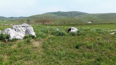 緑の大草原2.jpg