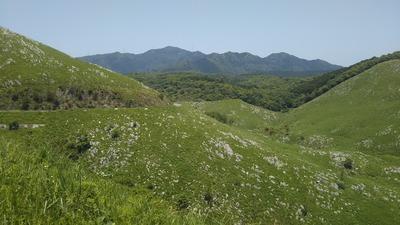 緑の大草原3.jpg