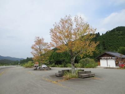 色付きだした木々.jpg