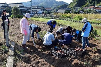 芋掘り4.jpg