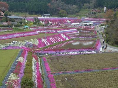 芝桜7.jpg