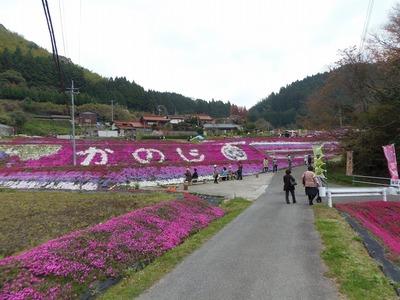 芝桜8.jpg