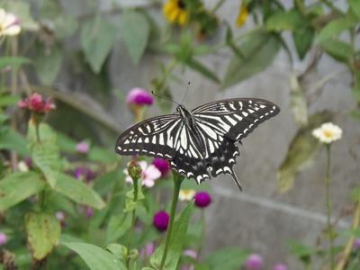 花と蝶1.jpg