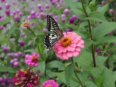 花と蝶2.jpg