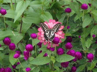 花と蝶3.jpg