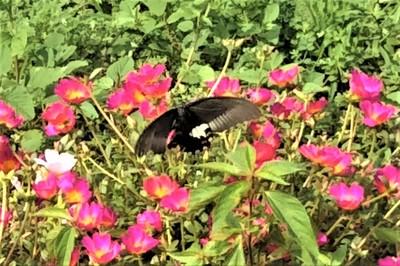 花と蝶9.10.JPG