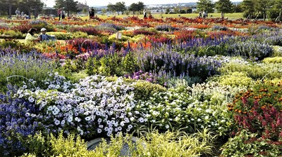 花の谷ゾーン2.jpg