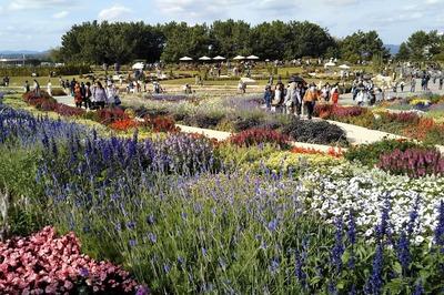 花の谷ゾーン:大花壇 3.jpg