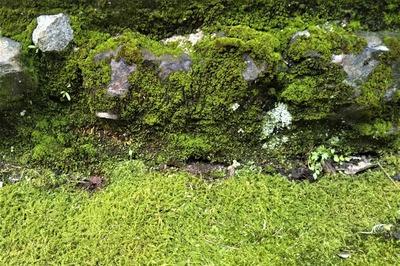苔岩2.jpg