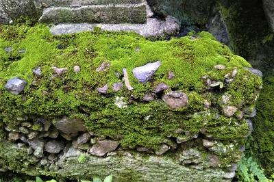 苔岩5.jpg
