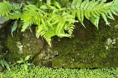 苔岩6.jpg