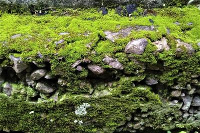 苔岩7.jpg