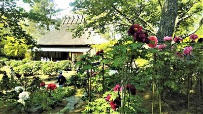 茅葺屋根の「憩いの家」3.jpg