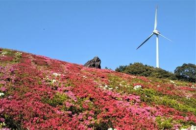 菅無田公園のツツジと風車.jpg