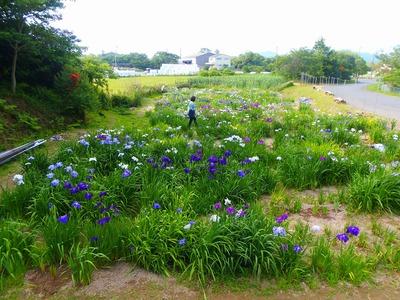 菖蒲園全景.jpg