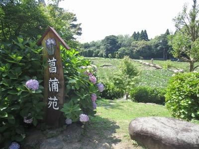 菖蒲苑1.jpg