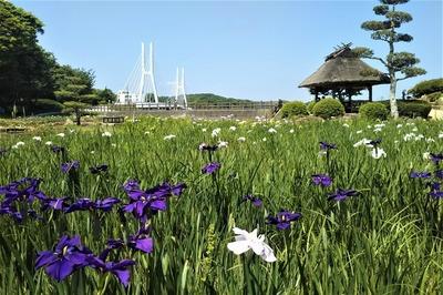菖蒲苑2.jpg