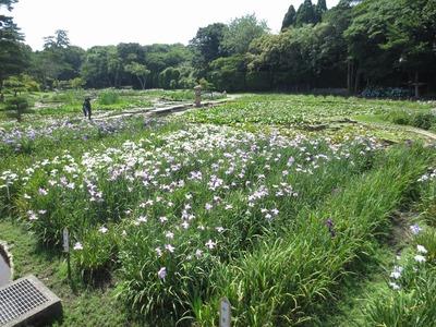 菖蒲苑3.jpg