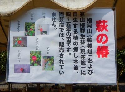萩の椿.jpg