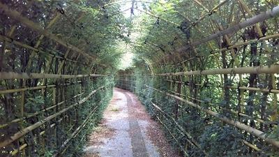 萩の花トンネル2.jpg