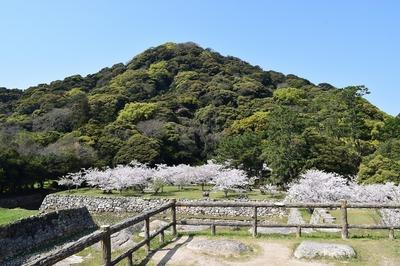 萩城天守閣跡と指月山.jpg