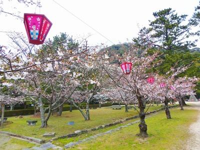 萩城跡指月公園桜1.jpg