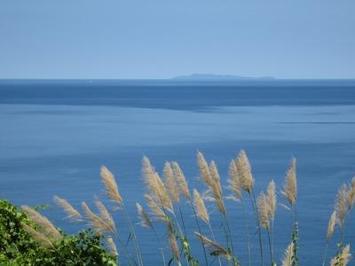 萩市見島とすすき.jpg
