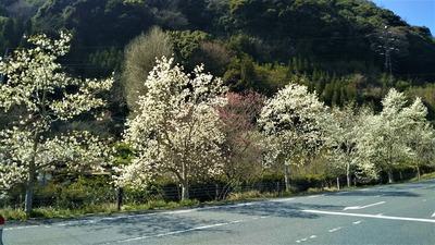 萩往還梅園近くの季節の花2.jpg
