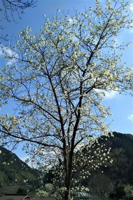 萩往還梅園近くの季節の花3.jpg