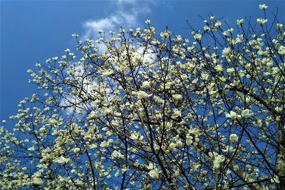 萩往還梅園近くの季節の花4.jpg