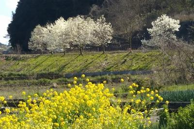 萩往還梅園近くの季節の花6.jpg