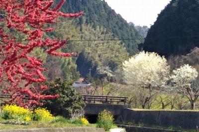 萩往還梅園近くの季節の花7.jpg