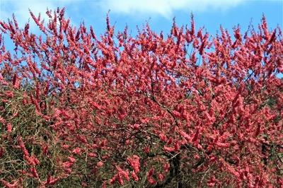 萩往還梅園近くの季節の花8.jpg