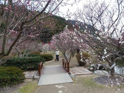 萩往還梅林園2.jpg