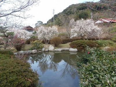 萩往還梅林園3.jpg