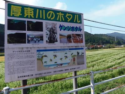 蕎麦 (そば)の花1.jpg