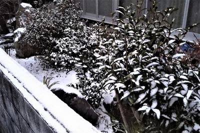 薄っすら雪化粧2.jpg