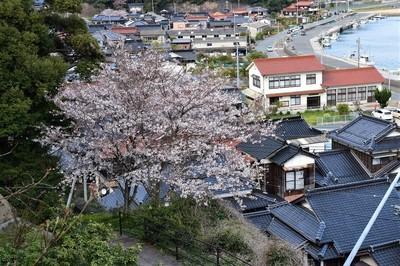薬師山の桜.jpg