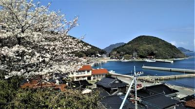 薬師山の桜3.jpg