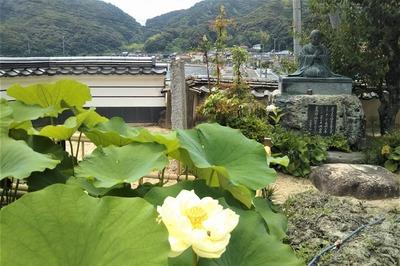 西園寺の青蓮1.jpg