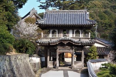 西圓寺のヤマザクラ1.jpg