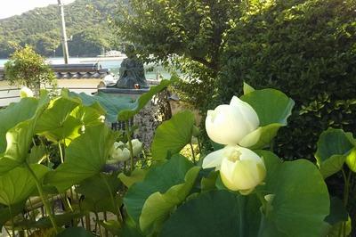 西圓寺の青蓮1.jpg