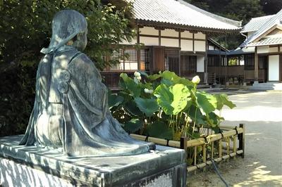 西圓寺の青蓮2.jpg