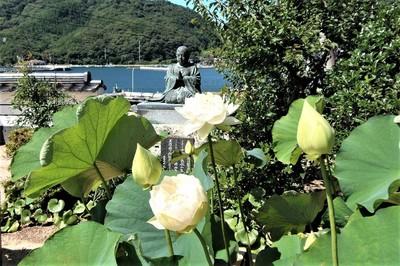 西圓寺の青蓮3.jpg
