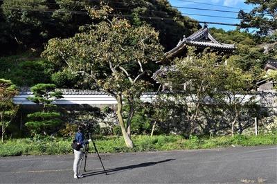 西圓寺山門と今が旬の柿取材2.jpg